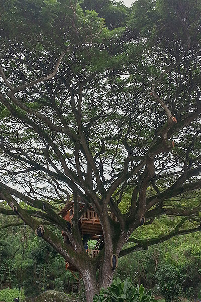 Hawaii Oahu Tree house by the Tree House Guys, DIY network